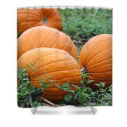 Pumpkin Pie Shower Curtain