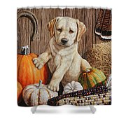 Pumpkin Puppy Shower Curtain