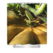 Pumpkin Ripe Shower Curtain