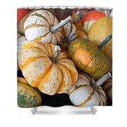 Pumpkins On Pumpkin Patch Shower Curtain