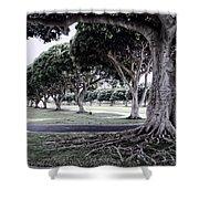 Punchbowl Cemetery - Hawaii Shower Curtain by Daniel Hagerman