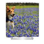 Pup In The Bluebonnets Shower Curtain