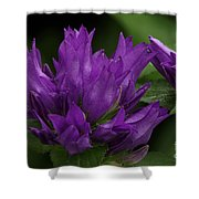 Puple Passion Shower Curtain
