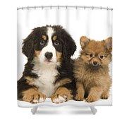 Puppies Shower Curtain