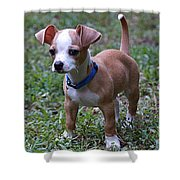 Puppy 2 Shower Curtain