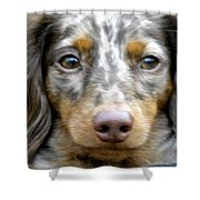 Puppy Dog Eyes Shower Curtain