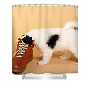 Puppy Dog With Head In Red Shoe Shower Curtain