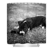 Puppy Eyes In Black And White Shower Curtain