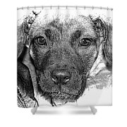 Puppy Face Shower Curtain