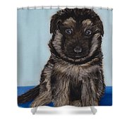 Puppy - German Shepherd Shower Curtain