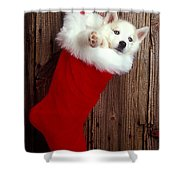 Puppy In Christmas Stocking Shower Curtain