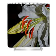Pure Lily Shower Curtain