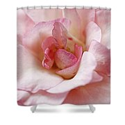 Pure Rose Shower Curtain