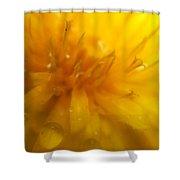 Pure Sun Shine Dandelion Shower Curtain