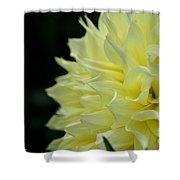 Purely Dahlia Shower Curtain