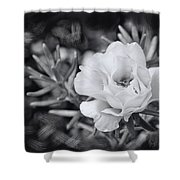 Purely Portulaca Shower Curtain