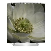 Pureness In White Shower Curtain
