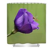 Purple 4 Shower Curtain