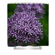 Purple Allium Shower Curtain