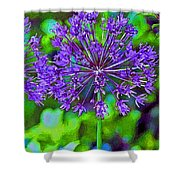 Purple Allium Flower Shower Curtain