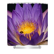 Purple And Bright Yellow Center Waterlily... Shower Curtain