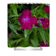 Purple And Red Shower Curtain