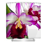 Purple And White Cattleyas Against White Space Shower Curtain