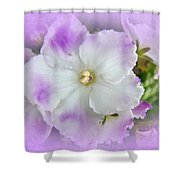 Purple And White Fancy African Violets Shower Curtain