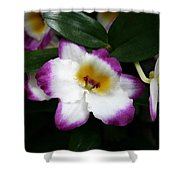 Purple And White Flower At Biltmore Estate Shower Curtain