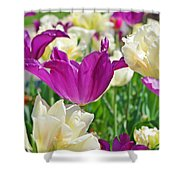 Purple And White Tulips Shower Curtain