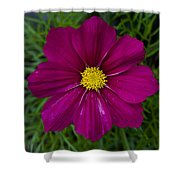 Purple And Yellow Brilliance Shower Curtain