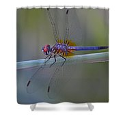Purple And Yellow Dragonfly On Navarre Beach Shower Curtain