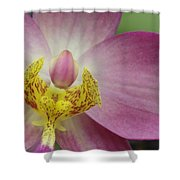 Purple And Yellow Orchid Shower Curtain