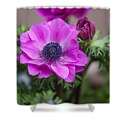Purple Anemone. Flowers Of Holland Shower Curtain