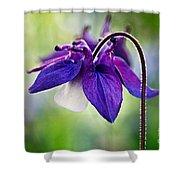 Purple Aquilegia Shower Curtain