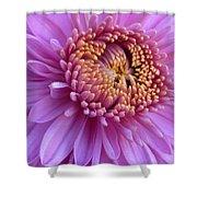 Purple Autumn Mum Shower Curtain