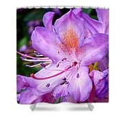Purple Azalea Shower Curtain
