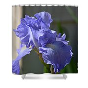 Purple Beauty Iris Shower Curtain