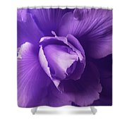 Purple Begonia Flower Shower Curtain