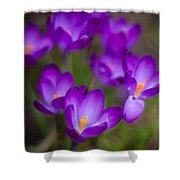Purple Blanket Shower Curtain