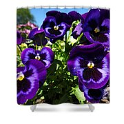 Purple Blooms Shower Curtain