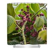 Purple Blooms Shower Curtain