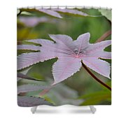 Purple By Nature II Shower Curtain