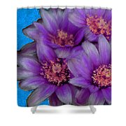 Purple Cactus Flowers Shower Curtain