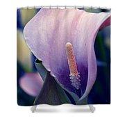 Purple Calla Flower Shower Curtain