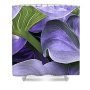 Purple Calla Lily Bush Shower Curtain