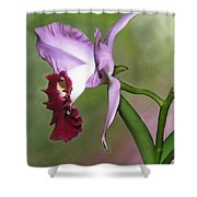 Purple Cattleya Orchid In Profile Shower Curtain