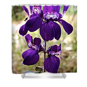 Purple Chinese Houses In Park Sierra-ca Shower Curtain