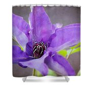 Purple Clematis Close Up Shower Curtain