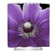 Purple Clematis Shower Curtain